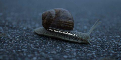 miert-lassu-a-honlapom-blog-webzenit